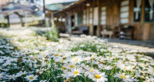 Maison fleuris, concours 2021